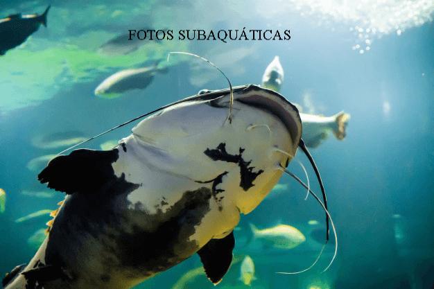 Fotografia subaquatica.jpg